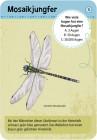 moses Verlag Expedition Natur - 50 heimische Insekten & Spinnen 9723